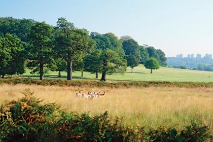 Richmond Park (NOT FOR REUSE)